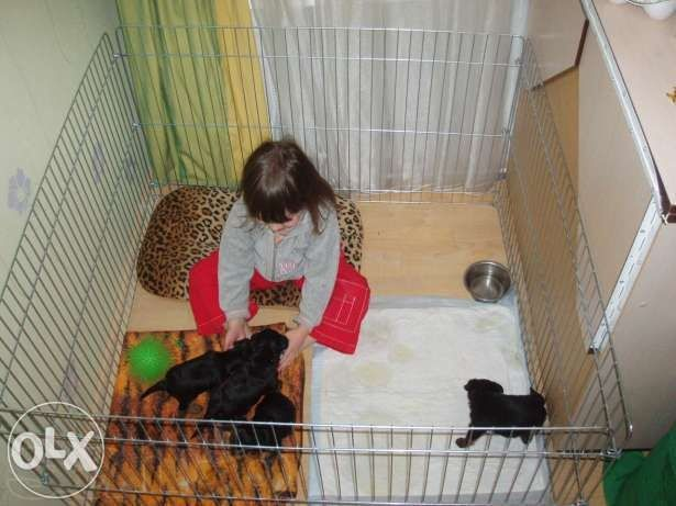 Манеж ясли барьер вольер клетка для собак щенков котят птиц 100х100х60