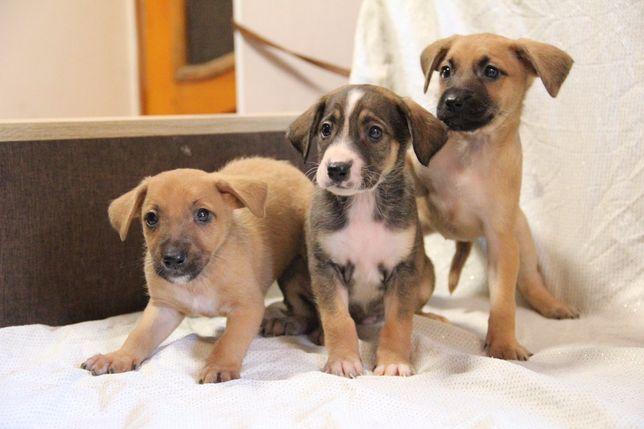Отдаем щенков в семью