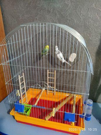 Попугаї з ВЕЛИКОЮ кліткою!!!