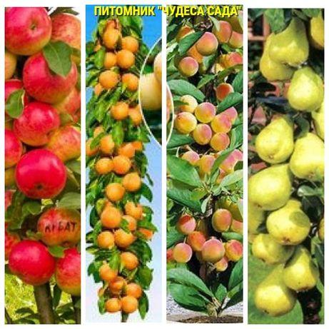 Саженцы колоновидных деревьев слива,персик, груша,черешня, яблоня.вишн