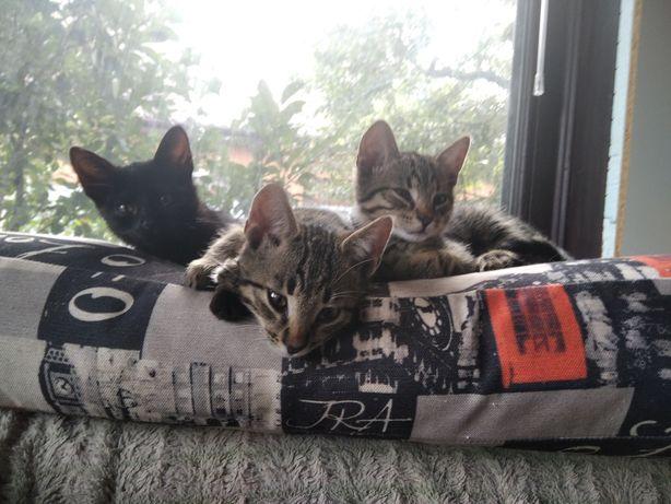 Миленькие  котята