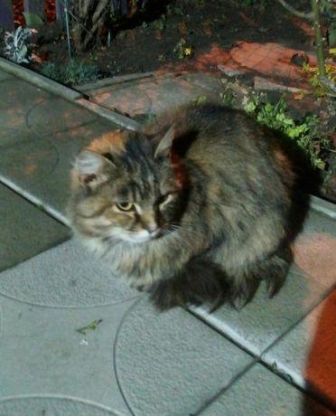 кто потерял кошку.кошка ищет дом.безплатно!