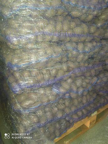 Продам картофель : посадочный и пищевой