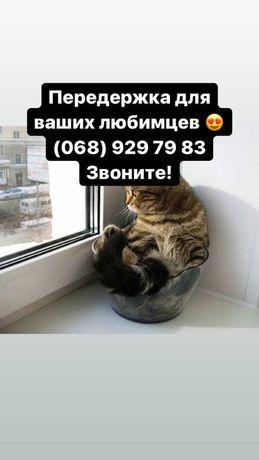 Зоогостиница-передержка кошечек и других животных в Киеве