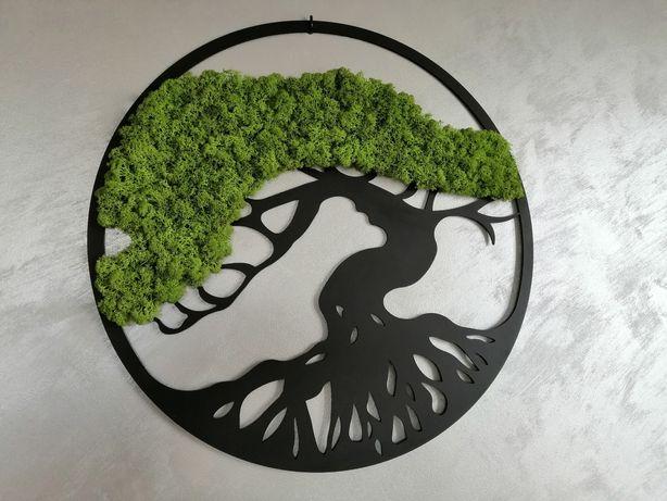 Drzewo mech chrobotek naturalny 60cm piękne Polecam