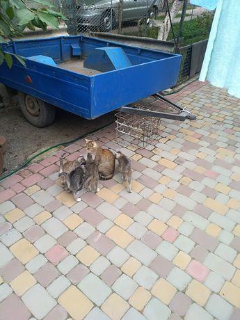 Поможіть роздати Котенята , котик, кішка, киця.