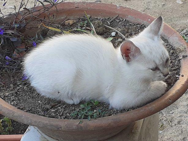 Gatinhos, para adopção, perto de Beja