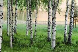 Wycinka Drzew Czyszczenie Działek Arborystyka trudne drzewa rębak
