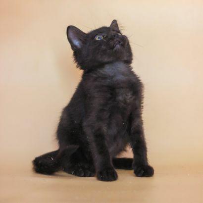 Крошка Блэки ищет семью котенок котята кошеня кот кошка котеня кошеня
