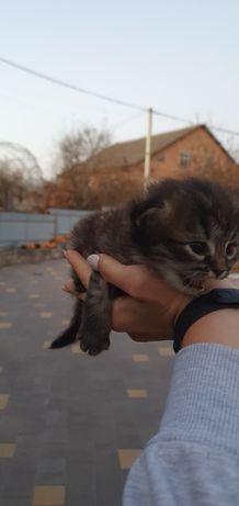 Кошеня у хороші руки