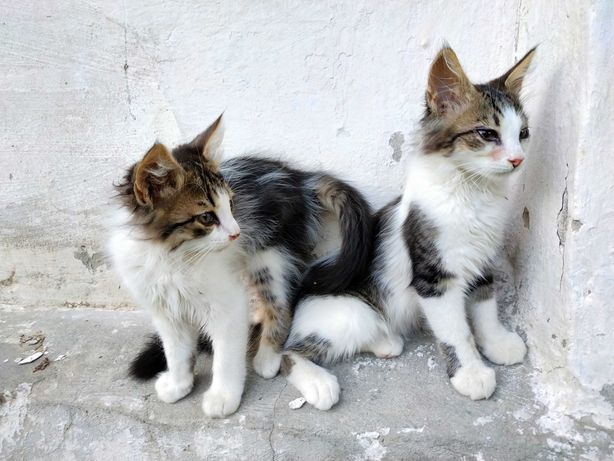 Отдам котят. Котенок. 2 мальчика