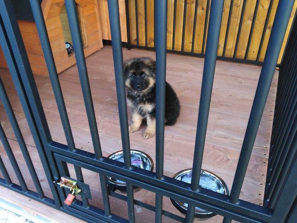 Kojec dla psa 6x3 m Kojce dla psów