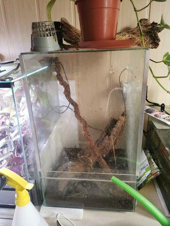 Terrarium z patyczakami