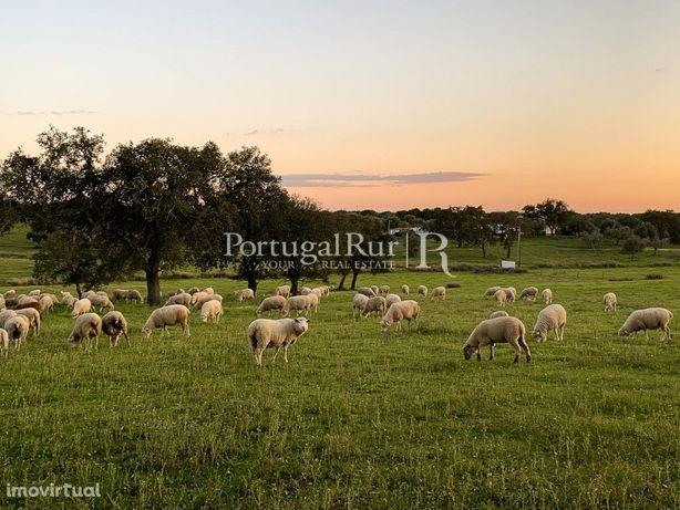 Herdade com 13 hectares localizada na freguesia de Pavia