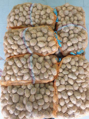 Ziemniaki jadalne Gala
