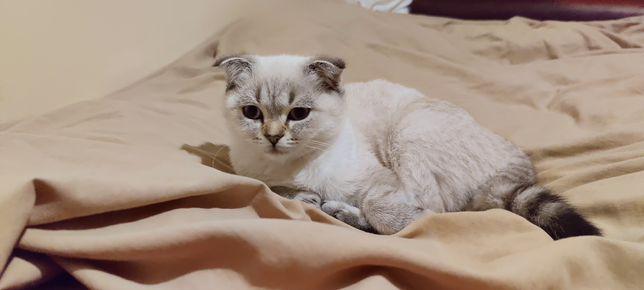 красивая милая кошка