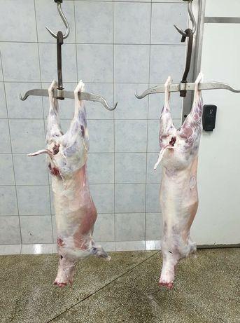 Baranina, jagnięcina świeże mięso