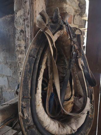 Chomonto dla konia.
