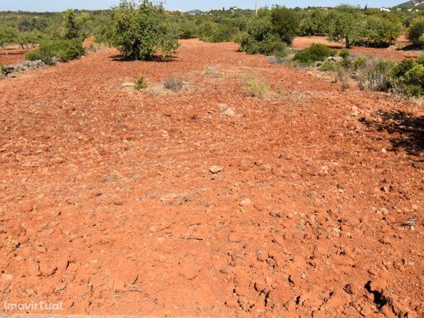Vende-se terreno rustico em Alcaria cova conselho de Faro
