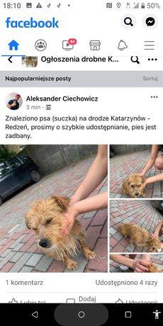 Znaleziono  psa(suczka) ma obrożę