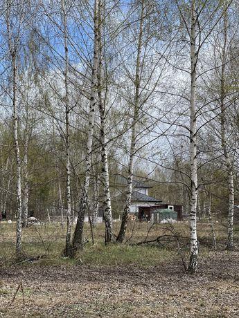 Дмитровка , ліс поряд