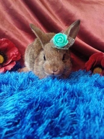 декоративный кролик 1,5 мес.