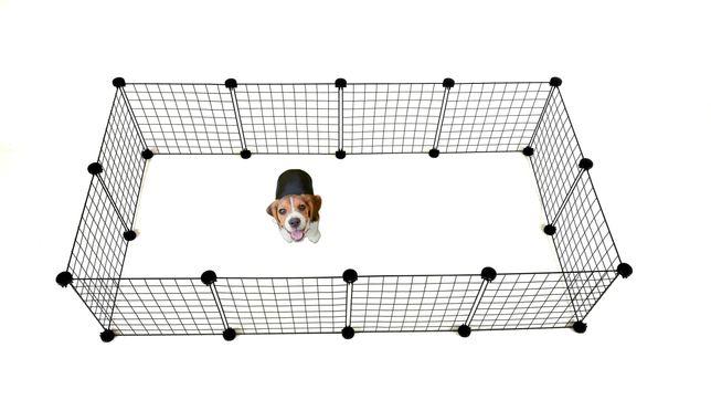 Wybieg kojec klatka dla psa szczeniąt marki C&C duży 145 x 75 cm