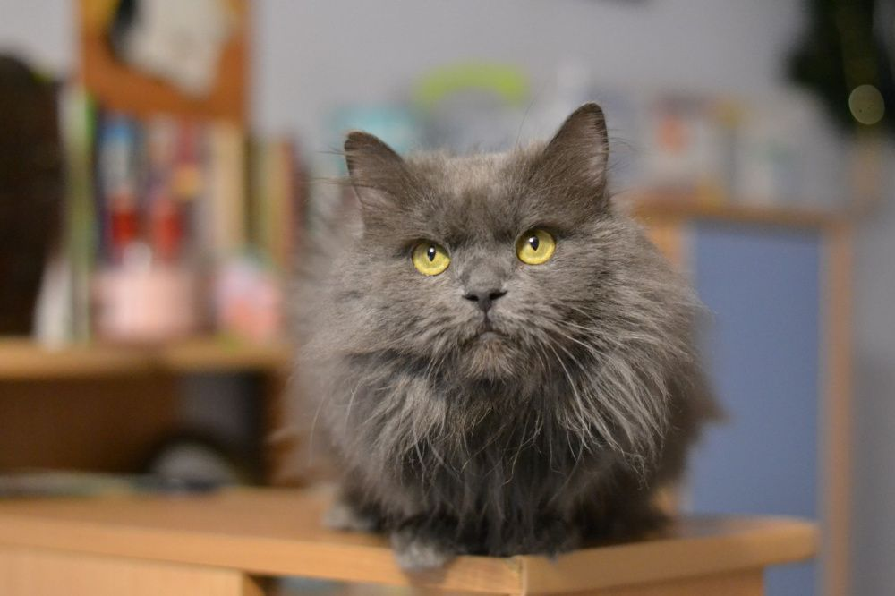 пухнастий котичок ніжний муркотичок 1р Киев - изображение 1