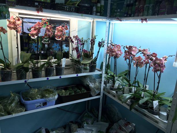 Фито лампа для растений