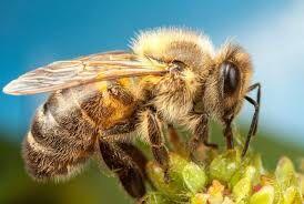 Продам пчел и улья