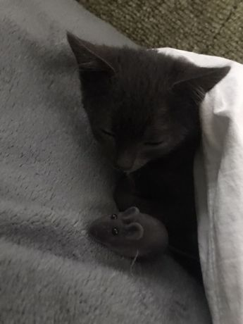 Віддамо кішечку в добрі руки