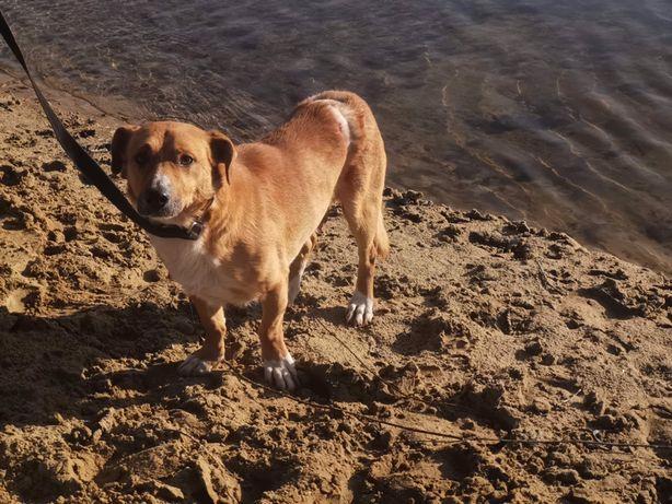 Dyzio pies, który wyrwał się śmierci ze szpon
