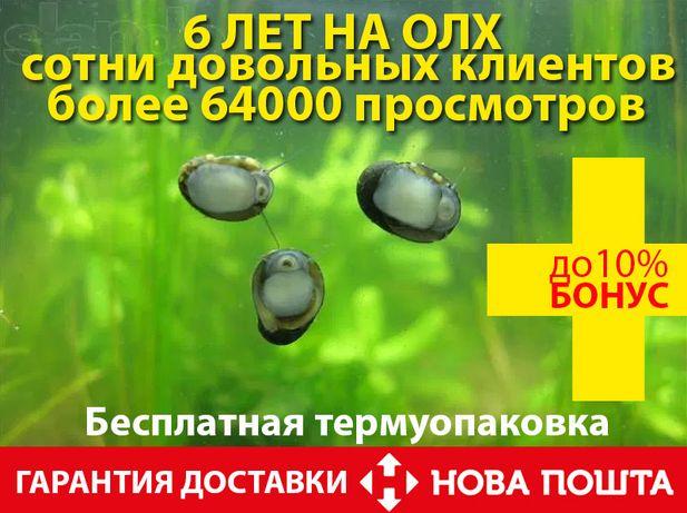 Продам 100% лучших чистильщиков стекол и растений-улиток теодоксус