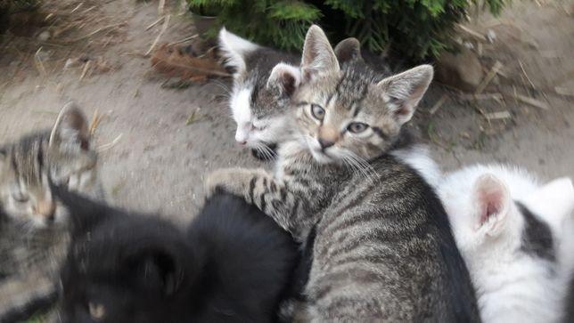 Młode kotki  w dobre ręce