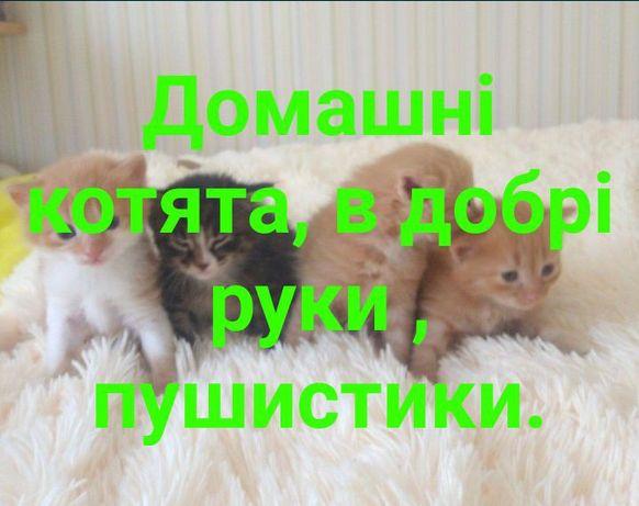 Котята, кошенята. Можлива доставка.