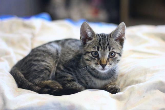 Очень ласковый и милый котенок.