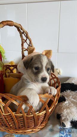 Хлоя 1 месяц собака собачка щенок
