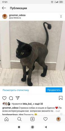 Стрижка Агрессивных!! кота, кошек, котов