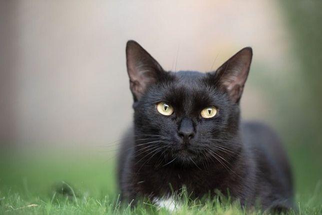 Znaleziono kota- czarny kot
