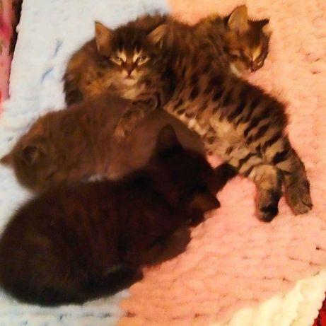 Котики шукають родину