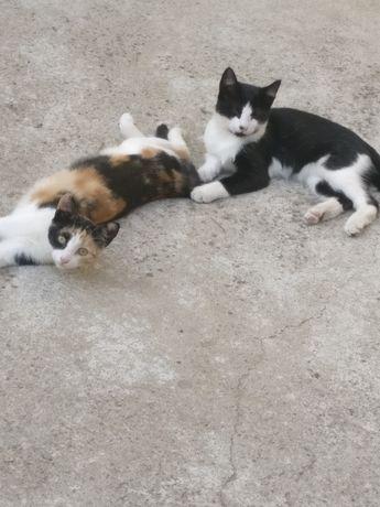 Gatinhos para adopção responsável