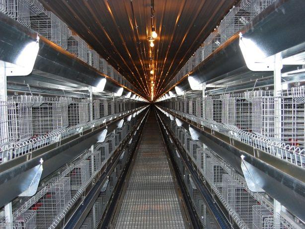 Клетка для кур-бройлеров 48 голов ТЕХНА-48 Германия, Акция