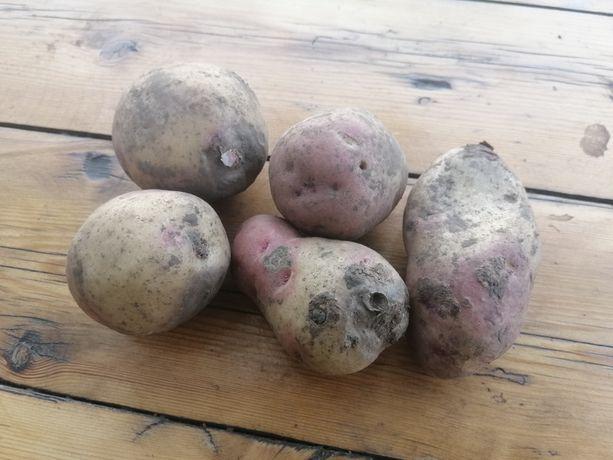 Бюджетный картофель