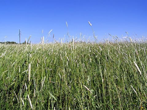 Terreno agricula grande (com barracao para trator e alfaias)
