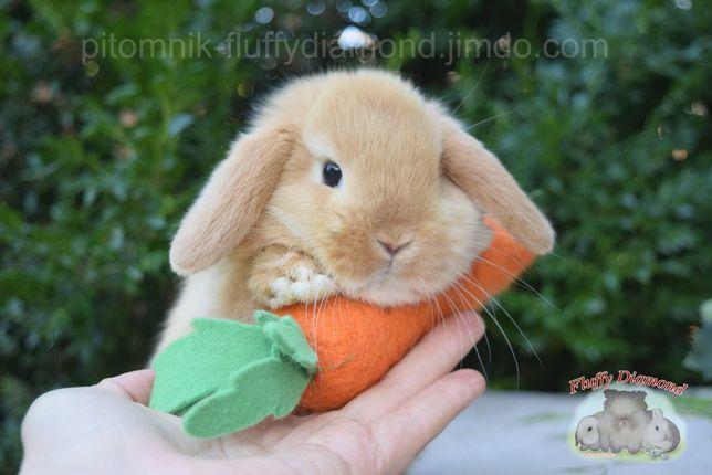 Вислоухие крольчата. Яркие типажные кролики из питомника
