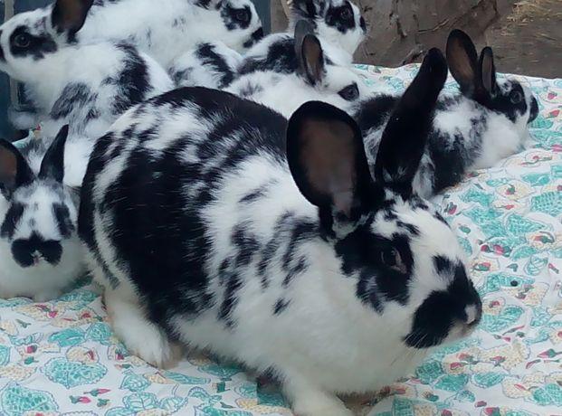 кролики бабочка и другие