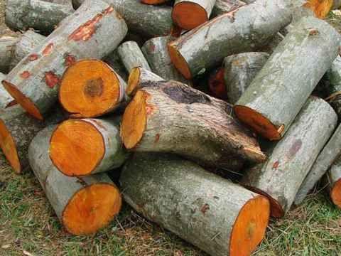 Drewno olszynowe olcha olszyna