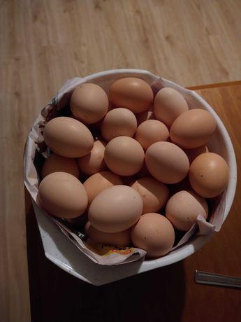 Jajka od młodych kurek