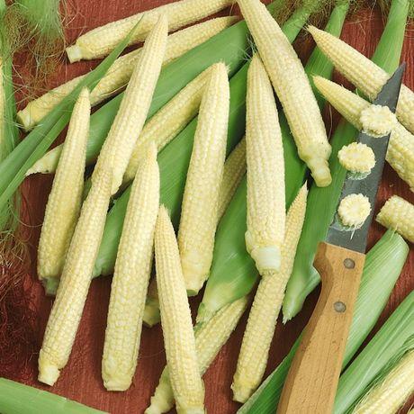 Семена интересной кукурузы. Кукуруза мини и Индейская многоцветная.