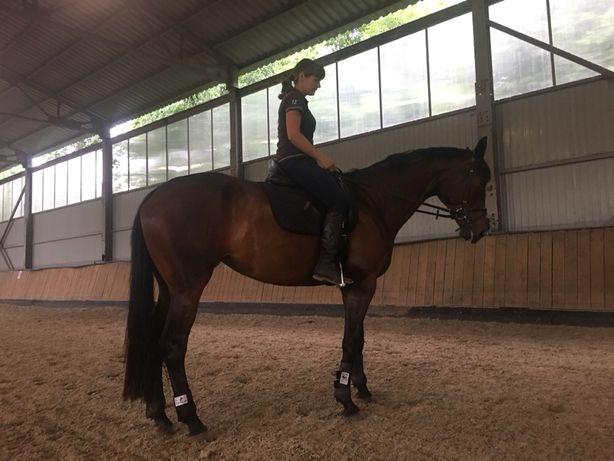 Кобыла лошадь конкур выездка